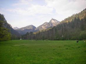 Photo: Pferde auf der Haiderhofwiese