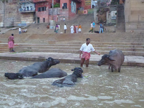 Photo: Voda je tak špinavá, že bych zde ani domácí zvířata nekoupal. Kromě popela se do řeky totiž vhazují mrtvá těla dětí, nemocných lidí apod.