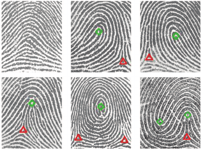 Fingerprint classes: Top row: arch, left loop, and right loop. Bottom... | Download Scientific ...