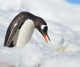 Photo: I don't think I am supposed to eat the yellow snow!