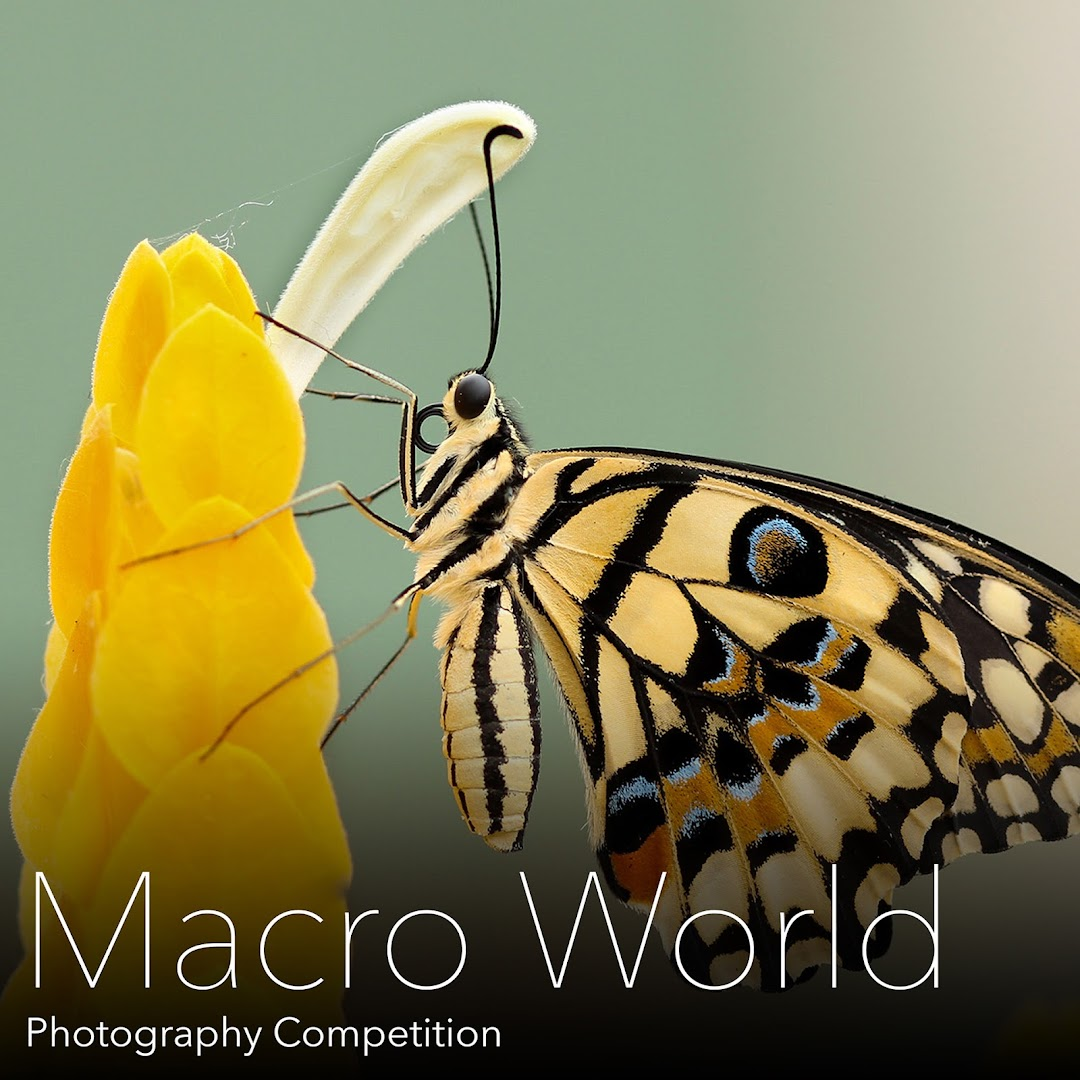 Macro World Photography Competition. Submit photos of our amazing world at the Macro level.