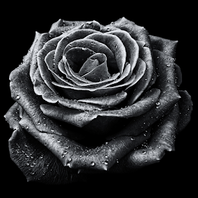 by Ad Spruijt - Black & White Flowers & Plants