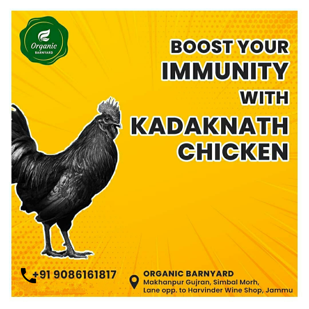 Kadaknath Chicken Available In Jammu | Here's why you need to introduce it into your diet