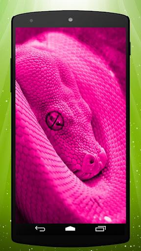 Pink Snake Live Wallpaper