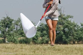 Photo: Kutatás fűhálóval