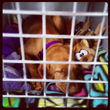 Photo: On her 1st long road trip with her new family to their home in Colorado.