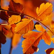 Autumn Live Wallpaper HD