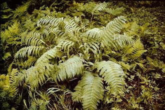Photo: Ferns.
