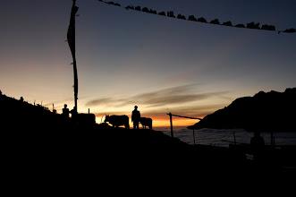 Photo: NEPAL- yaks at sunset
