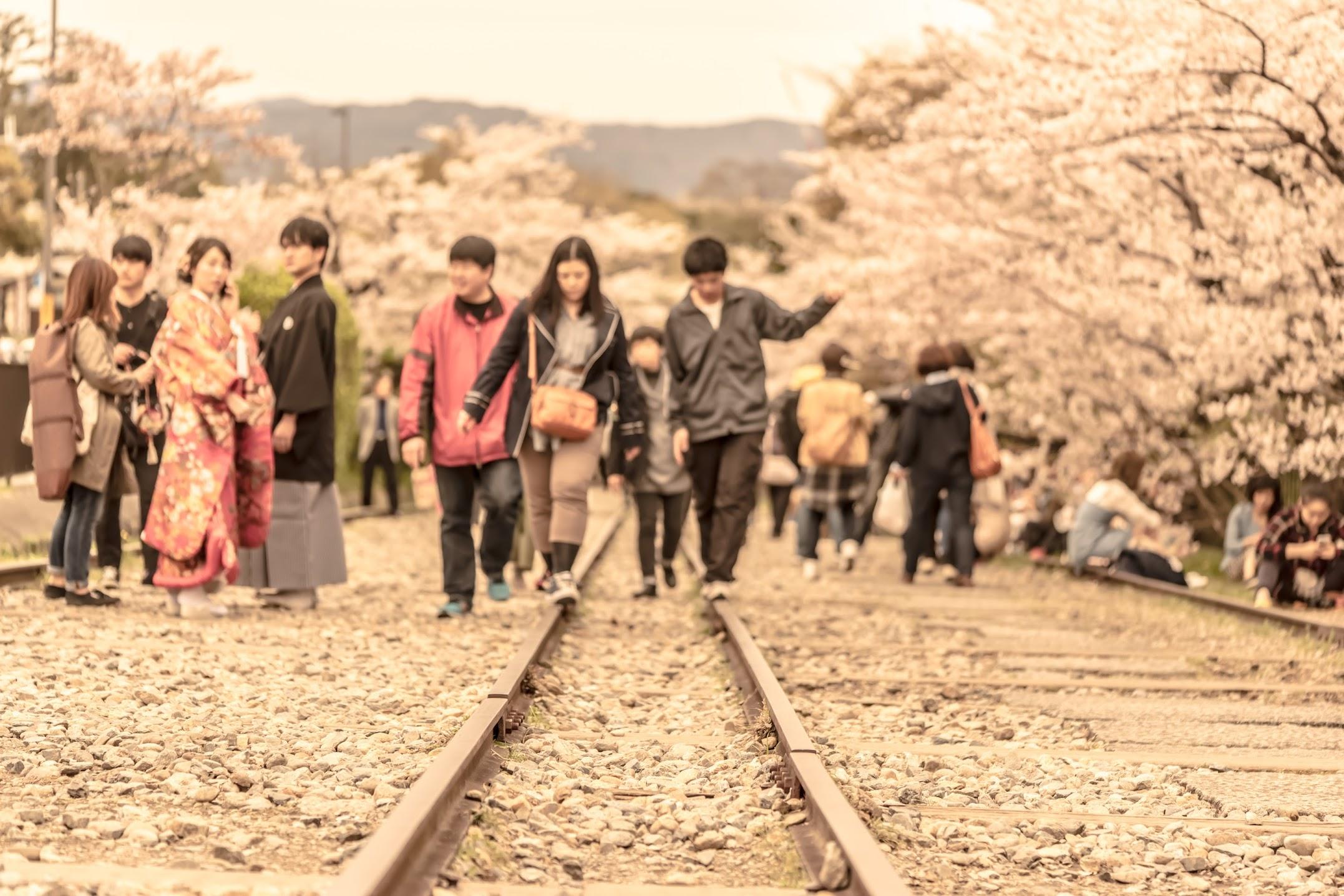 京都 桜 蹴上インクライン2