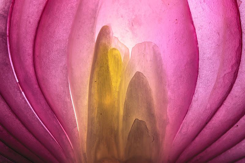 Purple in my o(pi)nion di prometeo
