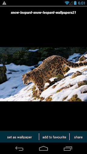 Download Snow Leopard Wallpapers Google Play softwares