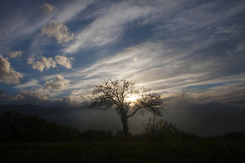 albero solitario di PaolaTizi