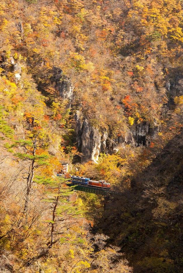 Lý do cho những chiếc lá mùa thu kỳ diệu ở Nhật Bản 4