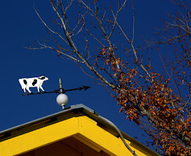 Photo: The weathervane on top of the old milking parlor
