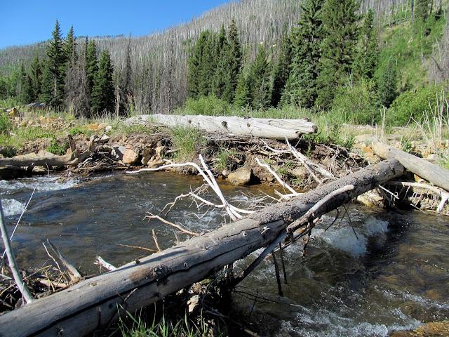 Fallen tree I used to cross Huntington Creek