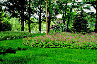 Photo: Don't fight to keep grass alive in the shade. Replace it instead with drifts of groundcover. It's easier and lower maintenance.