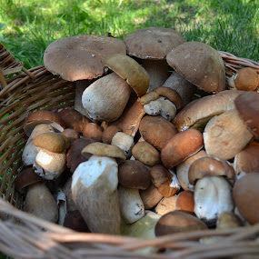 by Alina Vicu - Novices Only Macro ( mushrooms, porcinimushrooms, edible, porcini )