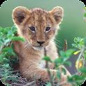 Little Lion Live Wallpaper icon