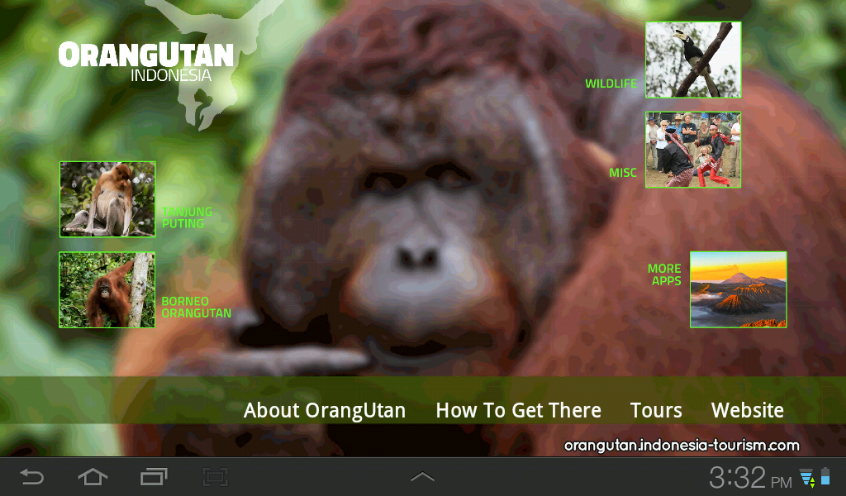 Orangutan - Indonesia- screenshot
