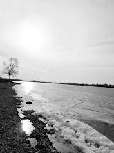 Photo: Black and white photo of a tree and ice on Eastwood Lake in Dayton, Ohio.