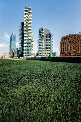 E sotto i grattacieli il grano di Sergio Locatelli