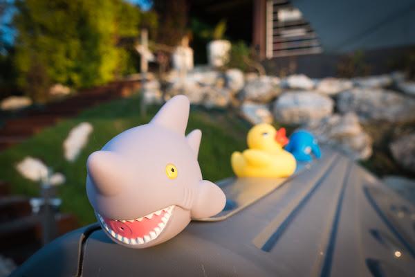 Shark & C.  di MicheleCarrano