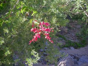 Photo: Flowering San Miguel