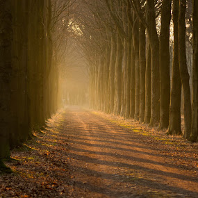 Sunny day @ the forest by Joyce Dales - Landscapes Forests ( forest, nikon, springtime, netherlands, sun )