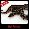 Ball Python icon