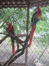 Photo: Macaws at Monkey Park