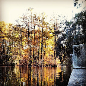 Greenfield Lake 5 by Paul Stanley - Instagram & Mobile iPhone