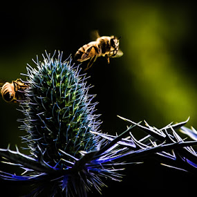 by Chris Martin - Nature Up Close Other Natural Objects ( bees, nature, bee,  )
