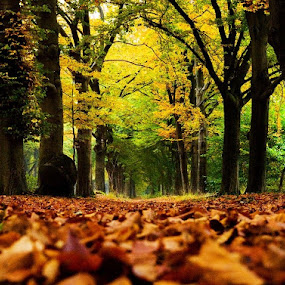 Autumn 9 by BertJan Niezing - Landscapes Prairies, Meadows & Fields