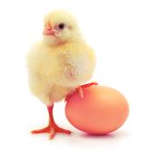 Guide Egg inc