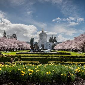 Oregon Capitol Cherry Blossoms 2016 by Craig Pifer - City,  Street & Park  City Parks ( oregon capitol, urban, oregon, nature, park, daffodils, bloom, landscape, spring, city, cherry blossoms )