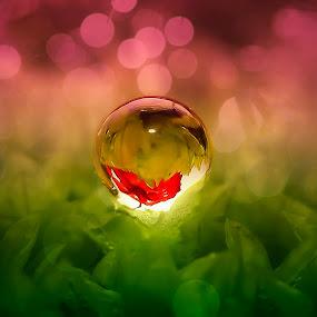 valentine drop love by Rifa Riza - Nature Up Close Water