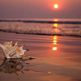 Shell on seashore by Kunal Karmakar - Landscapes Beaches ( solitude, sunrise, shell on seashore )