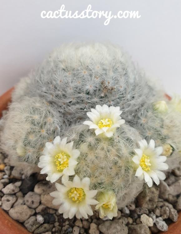 คำศัพท์ใหม่ๆ ในโลกของ กระบองเพชร (แคคตัส Cactus)
