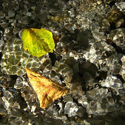 ...foglie morte ... galleggiano silenziose... di donyb