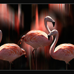 3 flamingos by Stephen Hooton - Uncategorized All Uncategorized ( , #GARYFONGDRAMATICLIGHT, #WTFBOBDAVIS )
