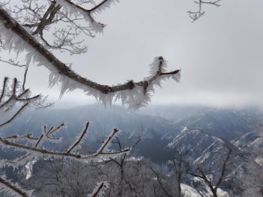 霧氷が綺麗に