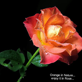 Orange...  by Asif Bora - Typography Quotes & Sentences