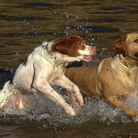 by Luis Palma - Animals - Dogs Playing