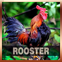 Rooster Sound Tone icon