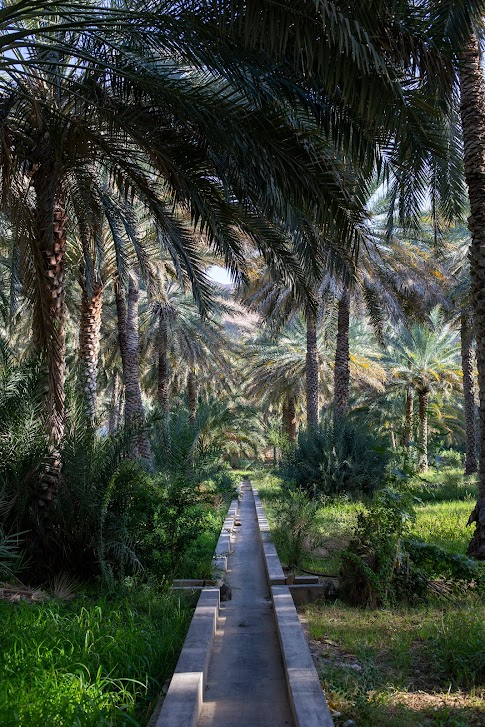 Birkat Al Mouz, Afladż, Oman