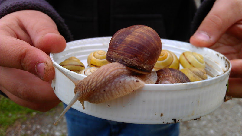 Photo: Bunch of snails