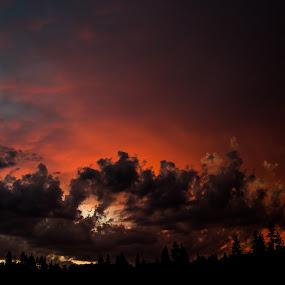 Natures light show by Scott Morgan - Landscapes Sunsets & Sunrises ( clouds, orange, tree line, sunset, cloudscape, cloudy, landscape,  )