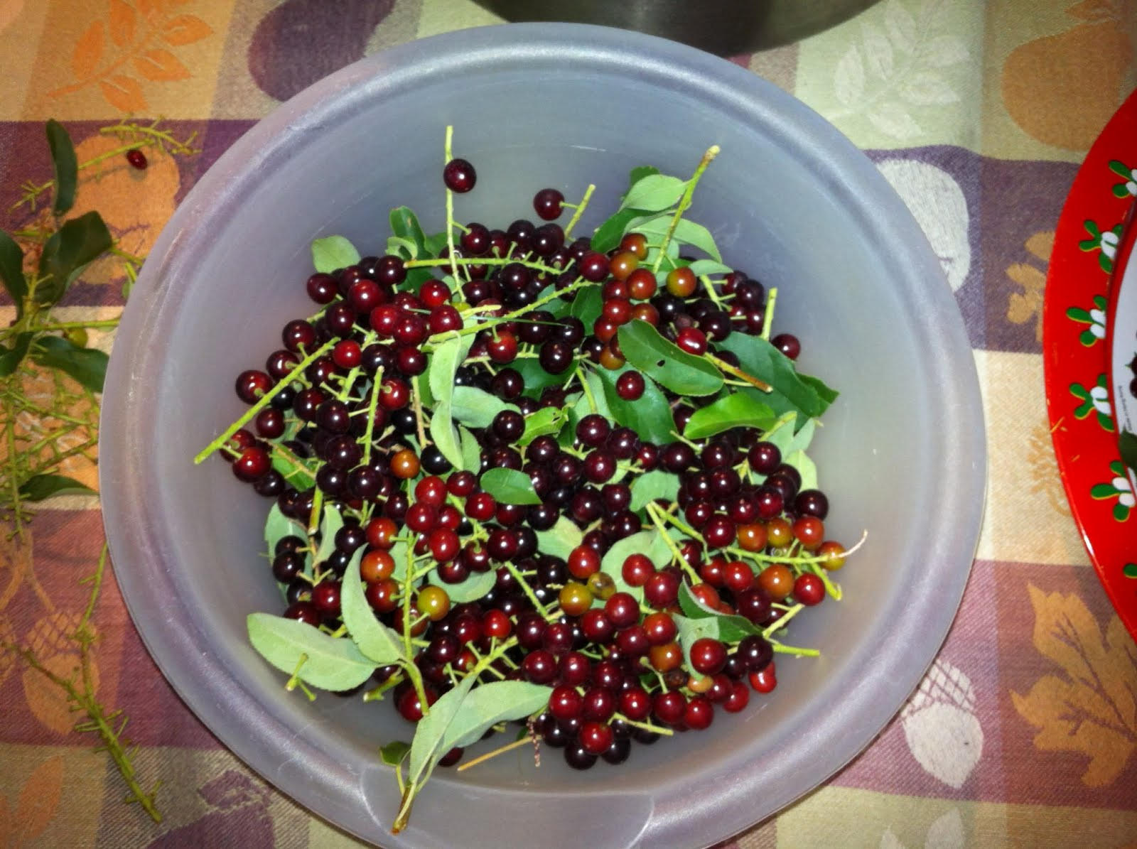 Capturing and Storing Energy with Homemade Chokecherry Wine