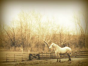 Photo: Sepia photo of a white horse at Carriage Hill Metropark in Dayton, Ohio.